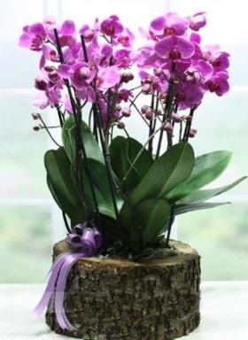 Kütük içerisinde 6 dallı mor orkide  Konya çiçek servisi , çiçekçi adresleri