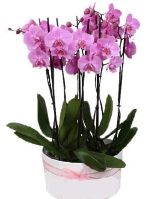 Beyaz seramik içerisinde 7 dallı mor orkide  Konya anneler günü çiçek yolla