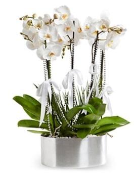 Beş dallı metal saksıda beyaz orkide  Konya uluslararası çiçek gönderme