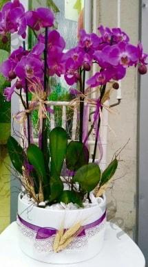Seramik vazoda 4 dallı mor lila orkide  Konya çiçek gönderme sitemiz güvenlidir
