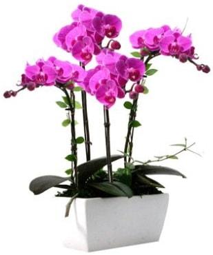 Seramik vazo içerisinde 4 dallı mor orkide  Konya hediye sevgilime hediye çiçek