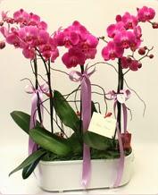 Beyaz seramik içerisinde 4 dallı orkide  Konya çiçek servisi , çiçekçi adresleri