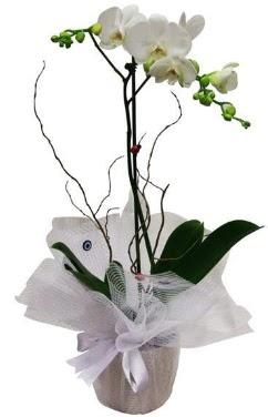 Tek dallı beyaz orkide  Konya çiçek yolla