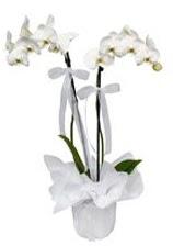 2 dallı beyaz orkide  Konya çiçekçiler