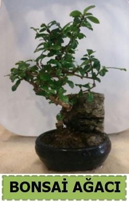 Bonsai ağacı japon ağacı satışı  Konya çiçek mağazası , çiçekçi adresleri