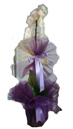 Tek dallı beyaz orkide süper kalite ithal  Konya güvenli kaliteli hızlı çiçek