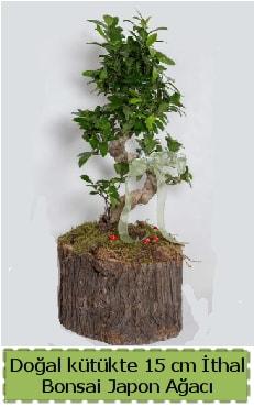 Doğal kütükte İthal bonsai japon ağacı  Konya 14 şubat sevgililer günü çiçek
