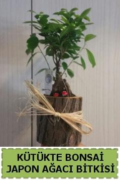 Kütük içerisinde doğal bonsai ağacı  Konya anneler günü çiçek yolla