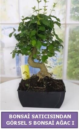 S dal eğriliği bonsai japon ağacı  Konya hediye sevgilime hediye çiçek