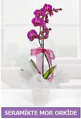 Seramik içerisinde birinci kalite tek dallı mor orkide  Konya cicek , cicekci