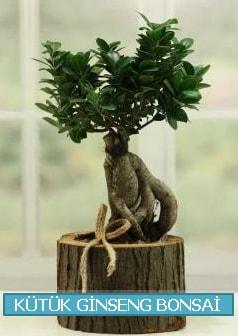 Kütük ağaç içerisinde ginseng bonsai  Konya cicekciler , cicek siparisi