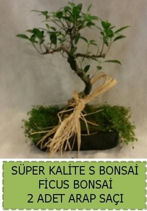 Ficus S Bonsai ve arap saçı  Konya anneler günü çiçek yolla