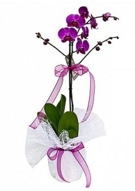 Tekli Mor Orkide  Konya uluslararası çiçek gönderme