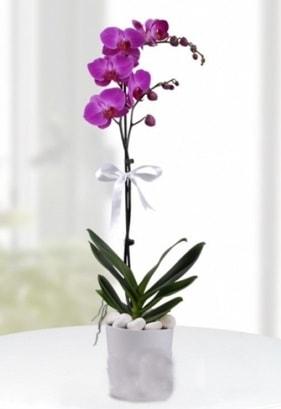 Tek dallı saksıda mor orkide çiçeği  Konya online çiçekçi , çiçek siparişi