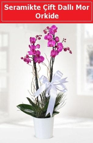 Seramikte Çift Dallı Mor Orkide  Konya çiçek , çiçekçi , çiçekçilik